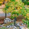 Rib Mountain Rock Tree