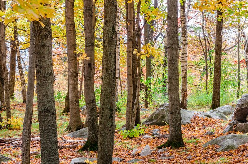 Rib Mountain Fall Trees