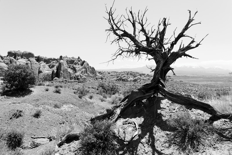 This tree was a welcome sight.  One has to wonder how many stories this tree can tell.