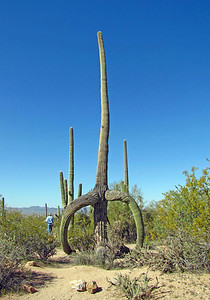 Saguaro National Park, Arizona (9)