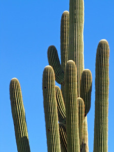 Saguaro National Park, Arizona (18)