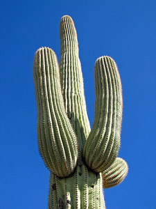 Saguaro National Park, Arizona (19)