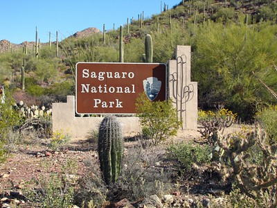 Saguaro National Park, Arizona (1)