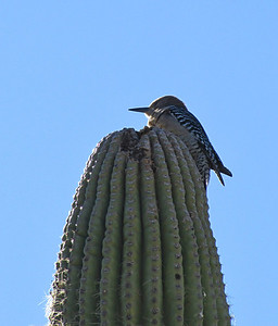 Saguaro National Park, Arizona (17)