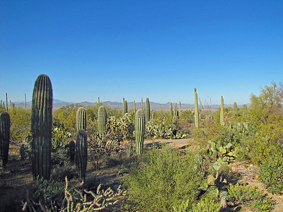 Saguaro National Park, Arizona (7)