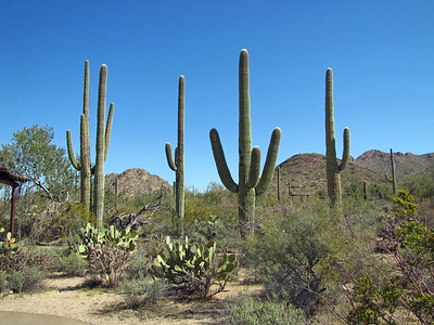 Saguaro National Park, Arizona (11)