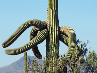 Saguaro National Park, Arizona (20)