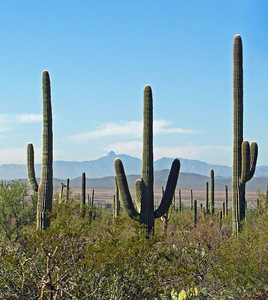 Saguaro National Park, Arizona (8)