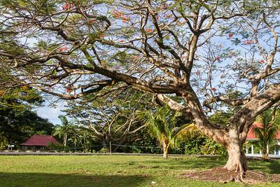 At National University of Samoa