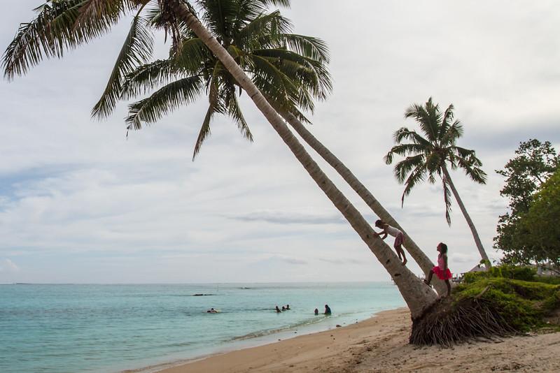 "Coconut tree - ""tree of life"""