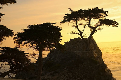 Pebble Beach, The Lonecypress