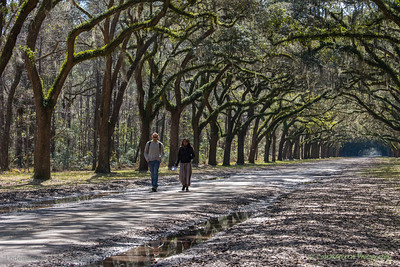 Wormsloe Plantation Park, GA