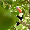Tuca in Iguazu NP