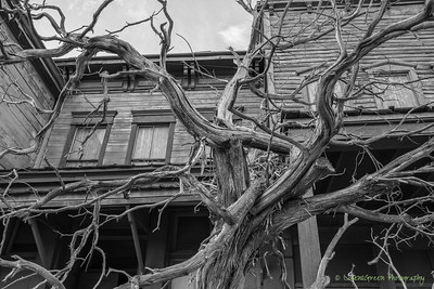 Movie set tree.