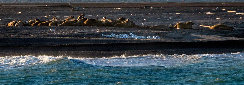 Spitzbergen - Moffen