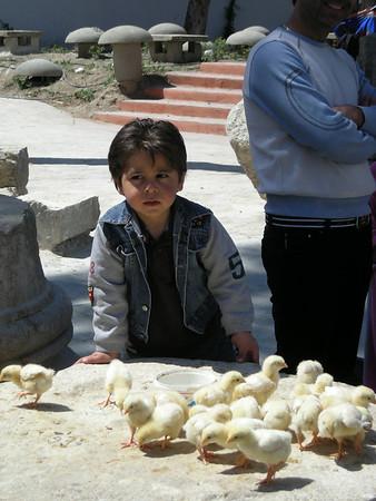Easter day chicks in the Christian Quarter, Damascus