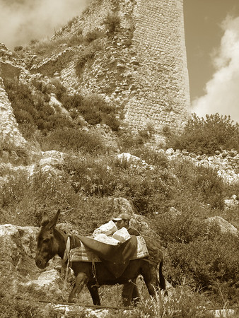 worker and his donkey at Qala'at Saladin