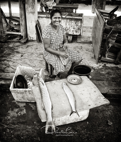 Negombo fish market.