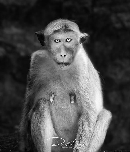 Portrait of a female monkey