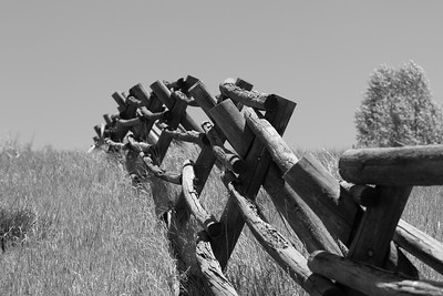 Along Hwy 129 on the way towards Steamboat Lake found this unusal timber fencing.