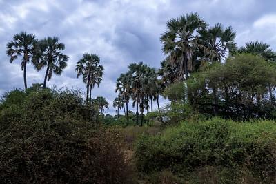 Tanzania - Lake Manyara