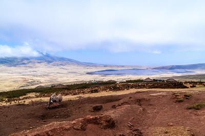 Tanzania - Ngorongoro