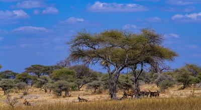 Tanzania - Tarangire NP
