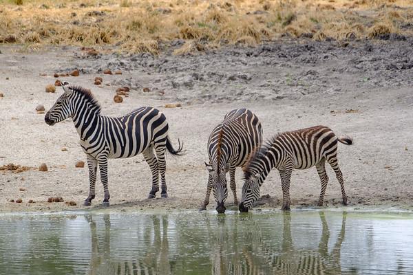 Tangire National Park