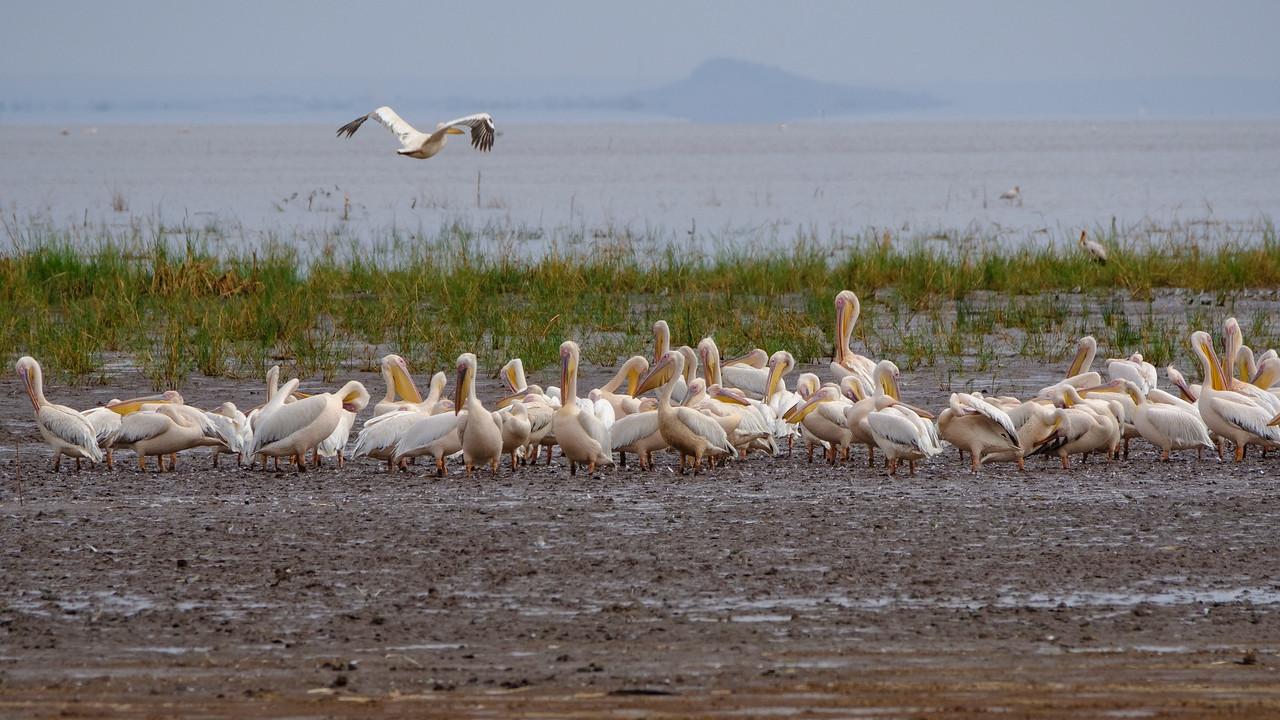 Lake Manyara National Park