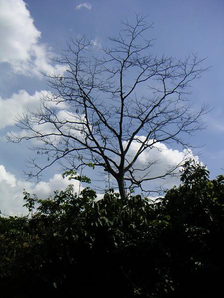 NS_Xt_2004-02-04_0769