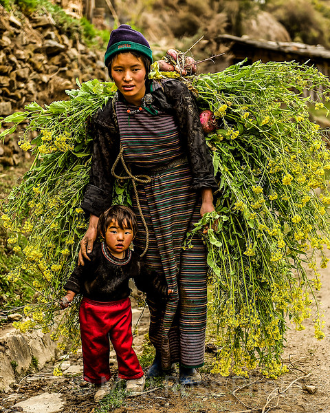 BHUTANESE MOTHER WITH CHILD, HARVESTING MUSTARD
