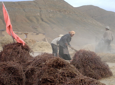 fall harvesting outside of Lhasa