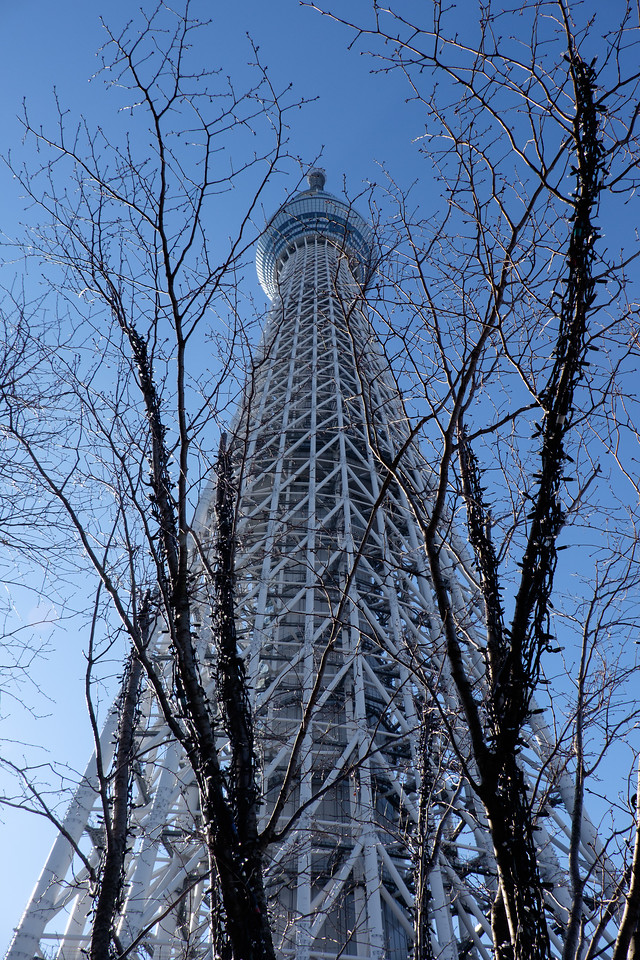 Tokyo Skytree through the trees