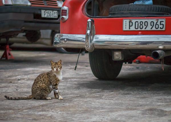 'El Gato'