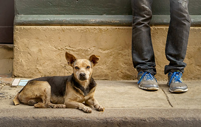 Just Chillin' in Old Havana     Canines Of Cuba©