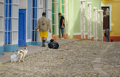 Don't Mind Me      Canines Of Cuba©