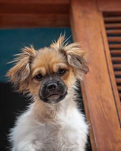 Livin' Life On The Ledge     Canines Of Cuba©