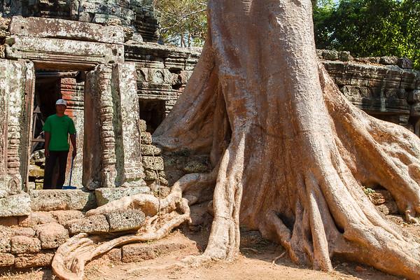 Ta Prohm ruins, Angkor