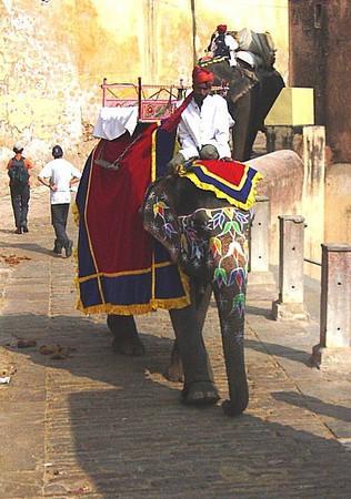 elephant transport for the Amber Fort, Jaipur