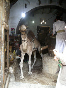 camel, with blindfold, turning a sesame seed grinding mill