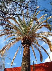 Tucson Downtown, Arizona (7)