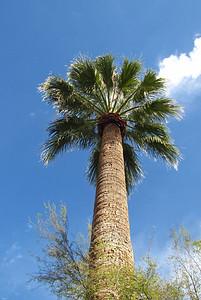 Tucson Downtown, Arizona (8)