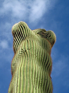 Tucson Downtown, Arizona (9)