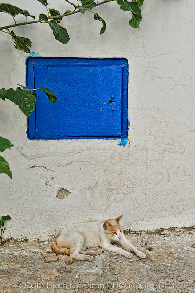 Cat posing at Sidi Bou Said, Tunis