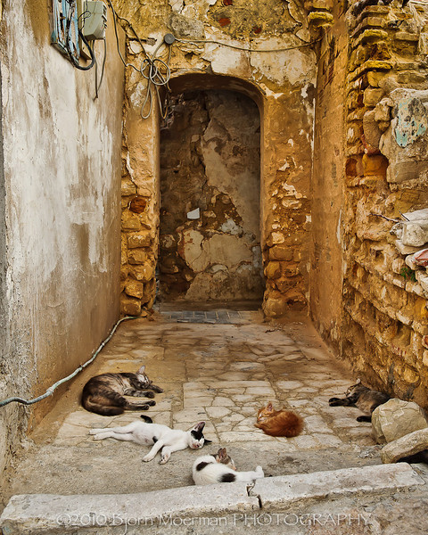 Cat siesta at Sidi Bou Said, Tunis