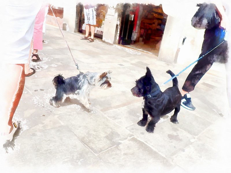 Dog Encounters ~ Venice