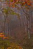 Landscapes of fall foliage throught the morning fog at Jennes Farm.