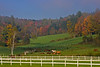 On the road to Grandville VT. Horses in fields with back drop of fall foiiage.