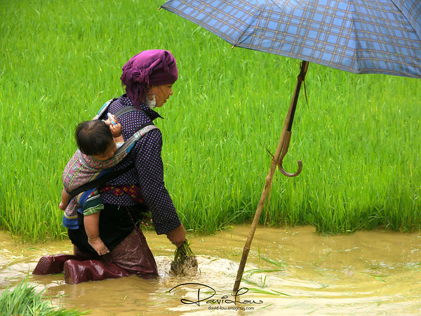 """Mother and child - My mood was quite despondent when I saw the mother tending to the fields with a toddler in tow, shifting about the umbrella to shield the little one. To my surprise, she gave me a warm smile when she saw me photographing them.  I like especially the rich colours but not so much about the """"scene"""" The scenario reinforced me that the strongest magnet for a photographer is not just the final image but also the discovery about human being's determination in life and the will to strive for survival."""