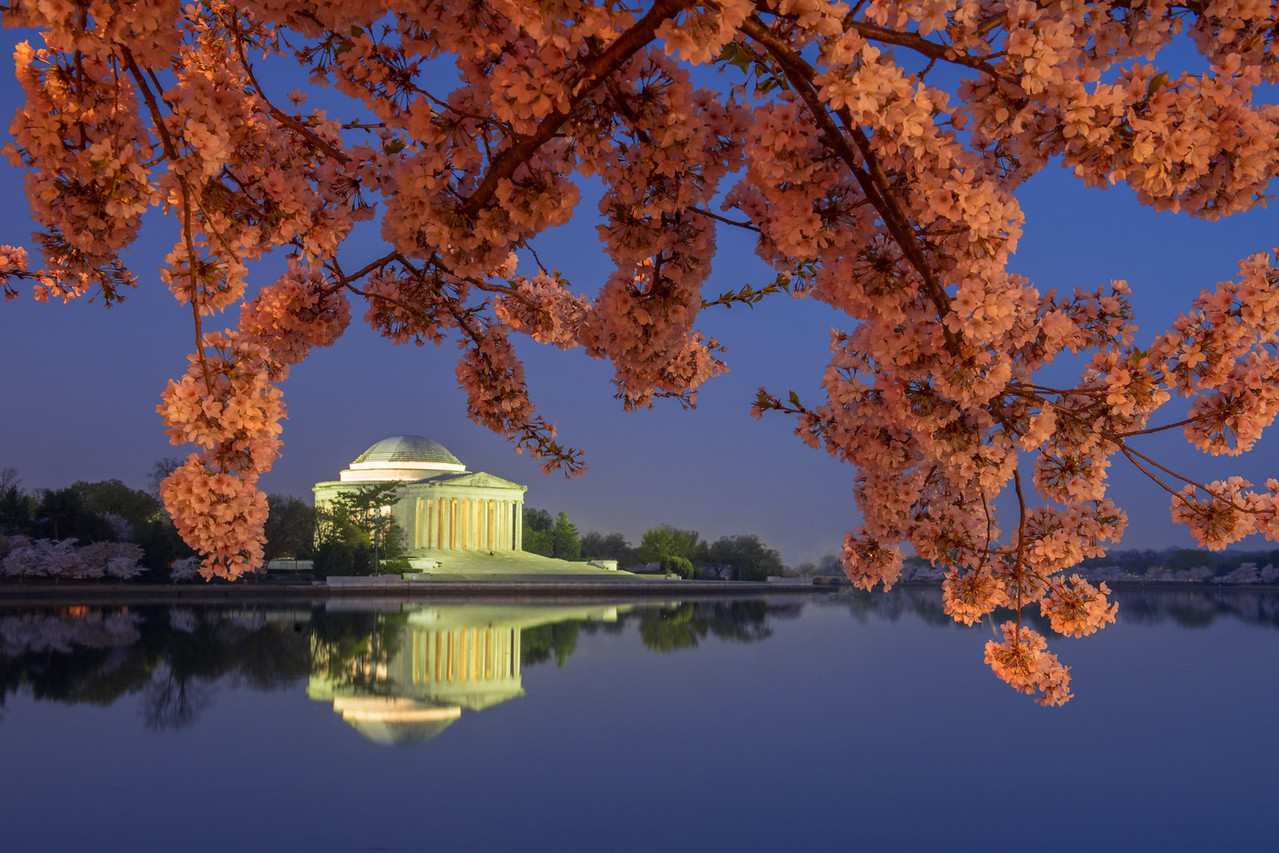Tidal Basin Beauty